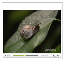 Freshwater Mussel Anatomy Video Package