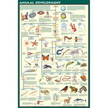 Animal Development Chart