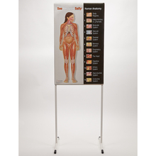 See-Through Sally™ Human Anatomy Chart Set
