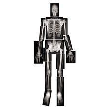True-to-Life Human X Rays