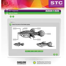 STC™ Organisms Interactive Whiteboard Activity
