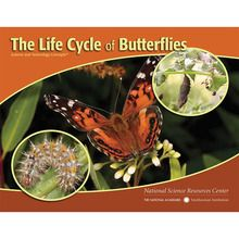 STC Literacy Series™: The Life Cycle of Butterflies, Pack of 8