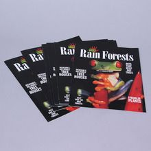 KIDS DISCOVER: Rain Forest, Pack of 8
