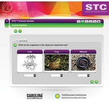 STC™ Animal Studies Interactive Whiteboard Activity
