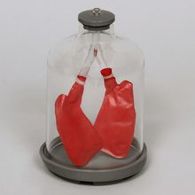 Lung Function Model Kit (Bell Jar)