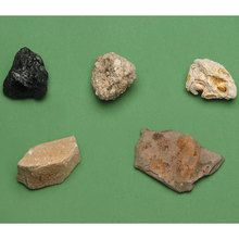 Sedimentary Rock Specimens