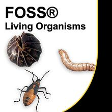 FOSS® Living Materials, Insects, Prepaid Coupon 4: 50 Silkworm Eggs
