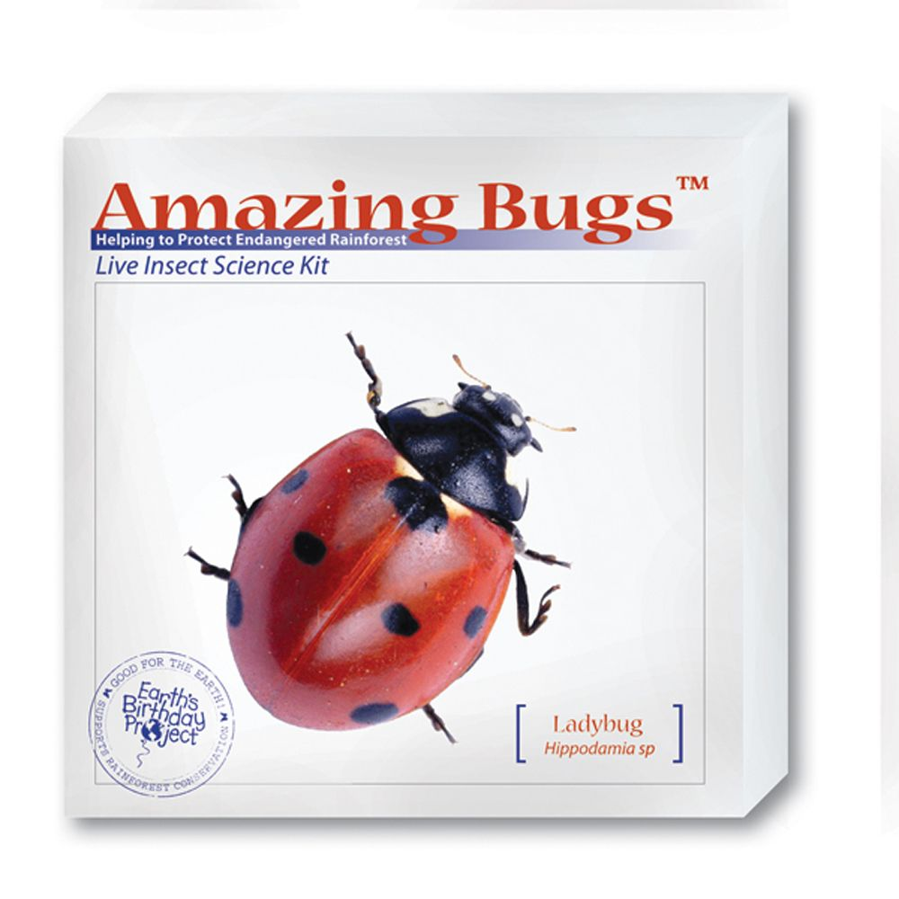 Ladybug amazing bugs kit with live ladybugs carolina ladybug amazing bugs kit with live ladybugs fandeluxe Image collections