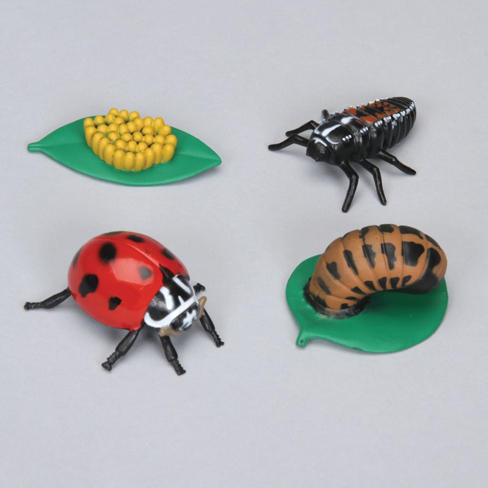 ladybug life cycle stages set carolina com