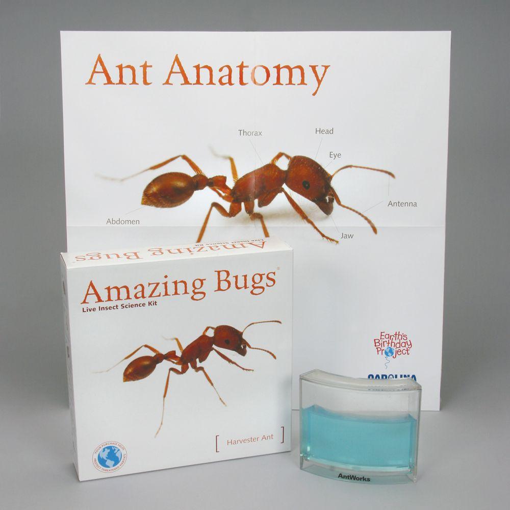 Ants Amazing Bugs® Kit (with live ants) | Carolina.com