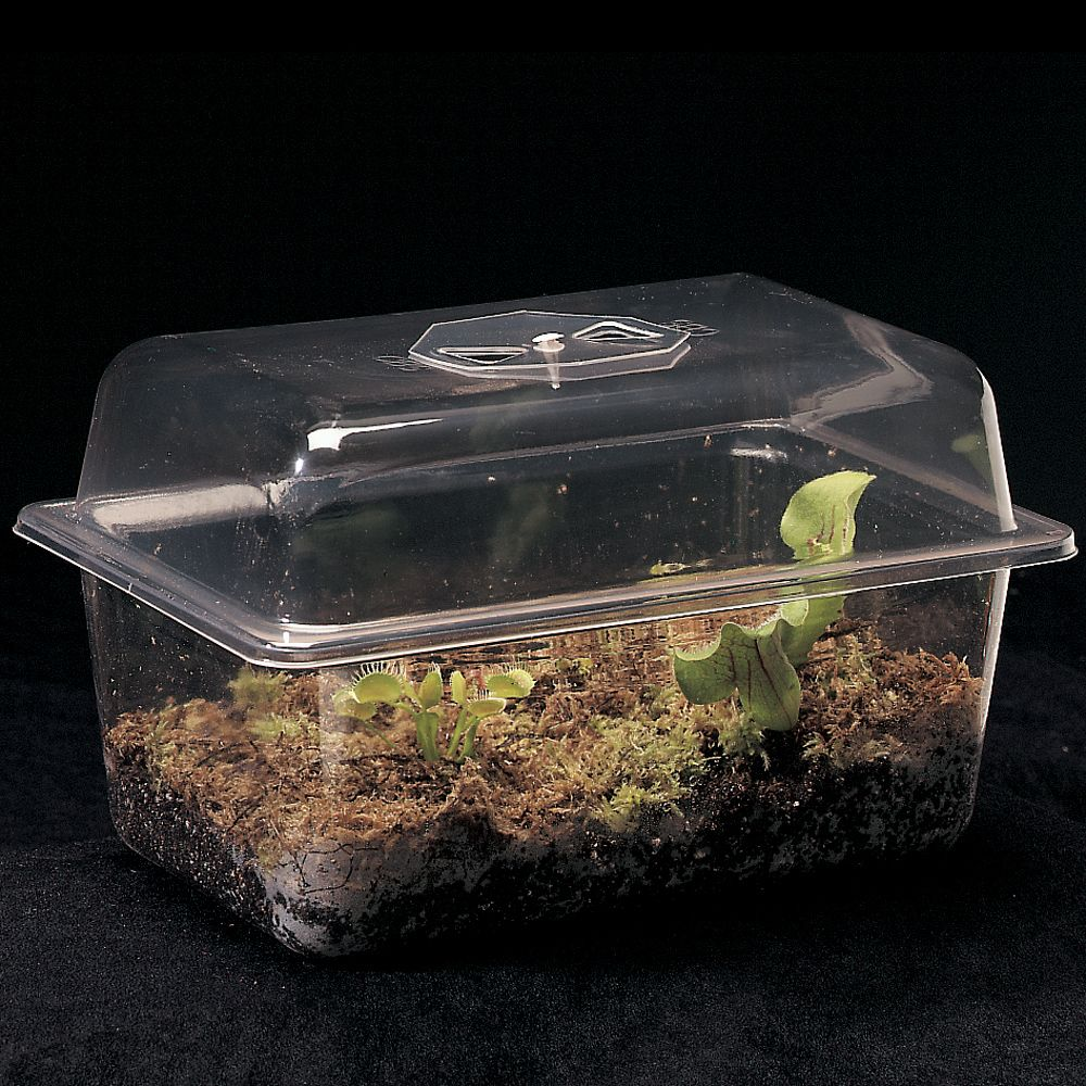Carnivorous Plant Terrarium Carolina Com