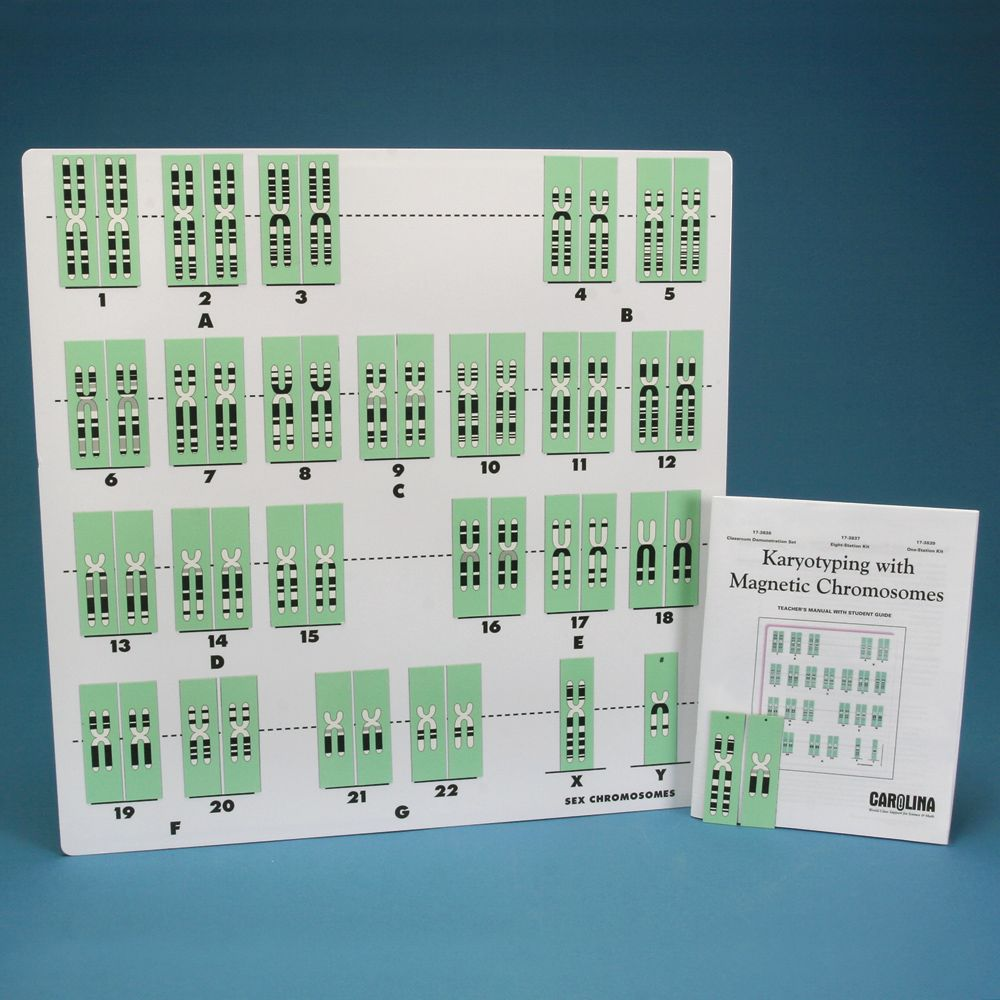 Karyotyping with Magnetic Chromosomes 8 Station Kit