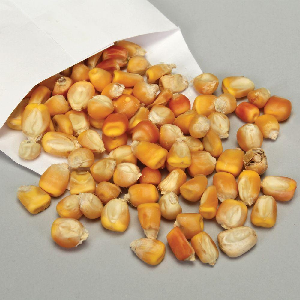 dwarf corn