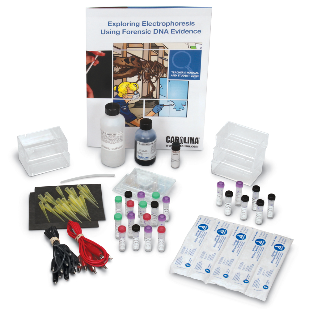 Use evidence found in DNA fingerprint patterns to argue which suspect committed a crime with the Exploring Electrophoresis Using DNA Evidence kit.