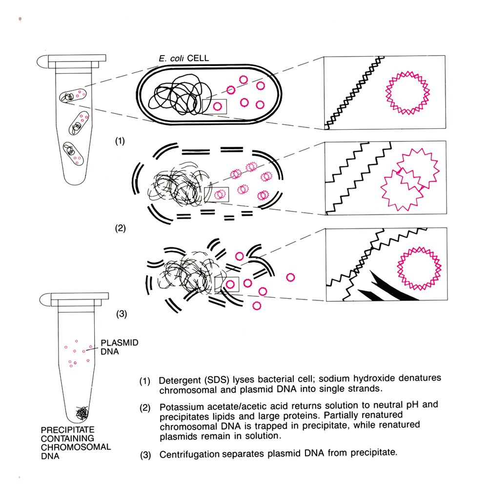 microbial transformation of non steroids
