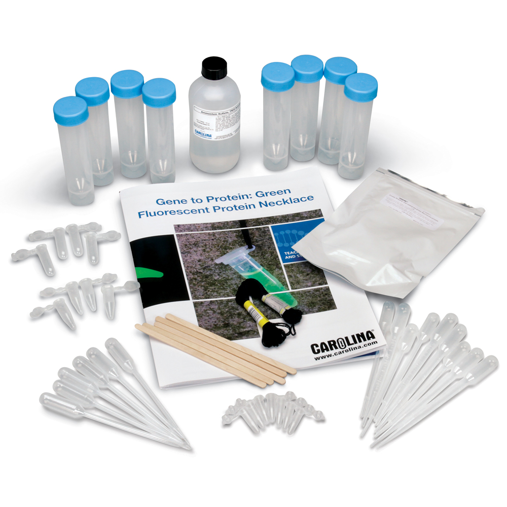 Use a simple purification process to isolate green fluorescent protein with this Gene to Protein kit.