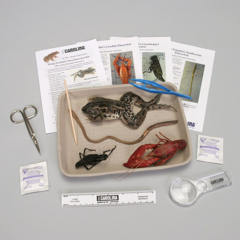 Young Scientist dissection kits
