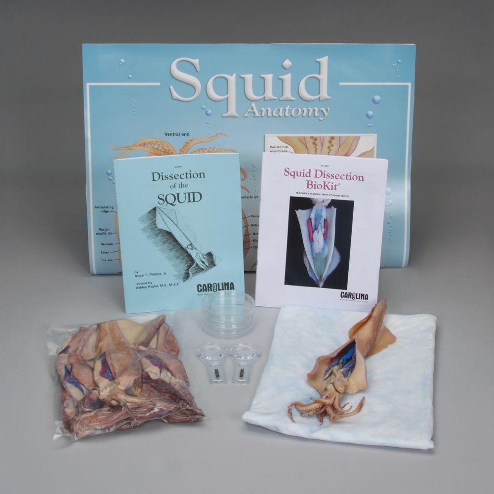 Squid Dissection BioKit® | Carolina.com