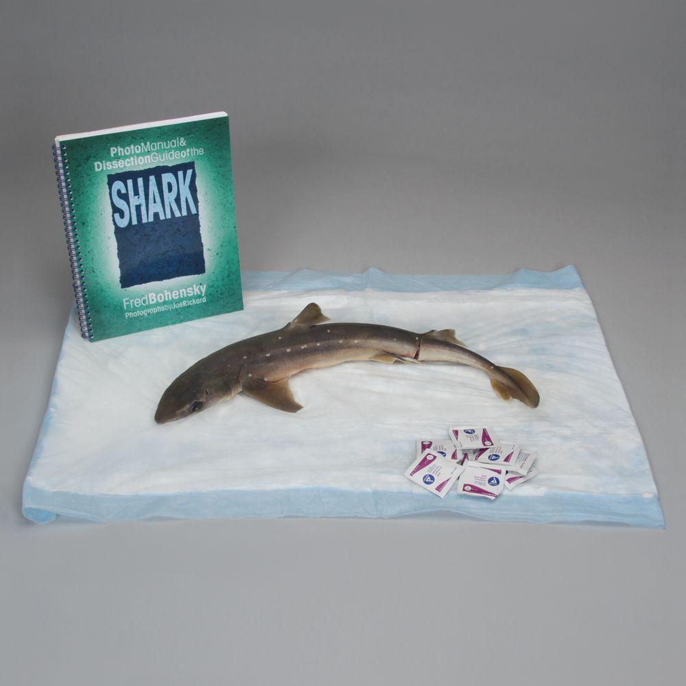 Shark Anatomy Kit | Carolina.com