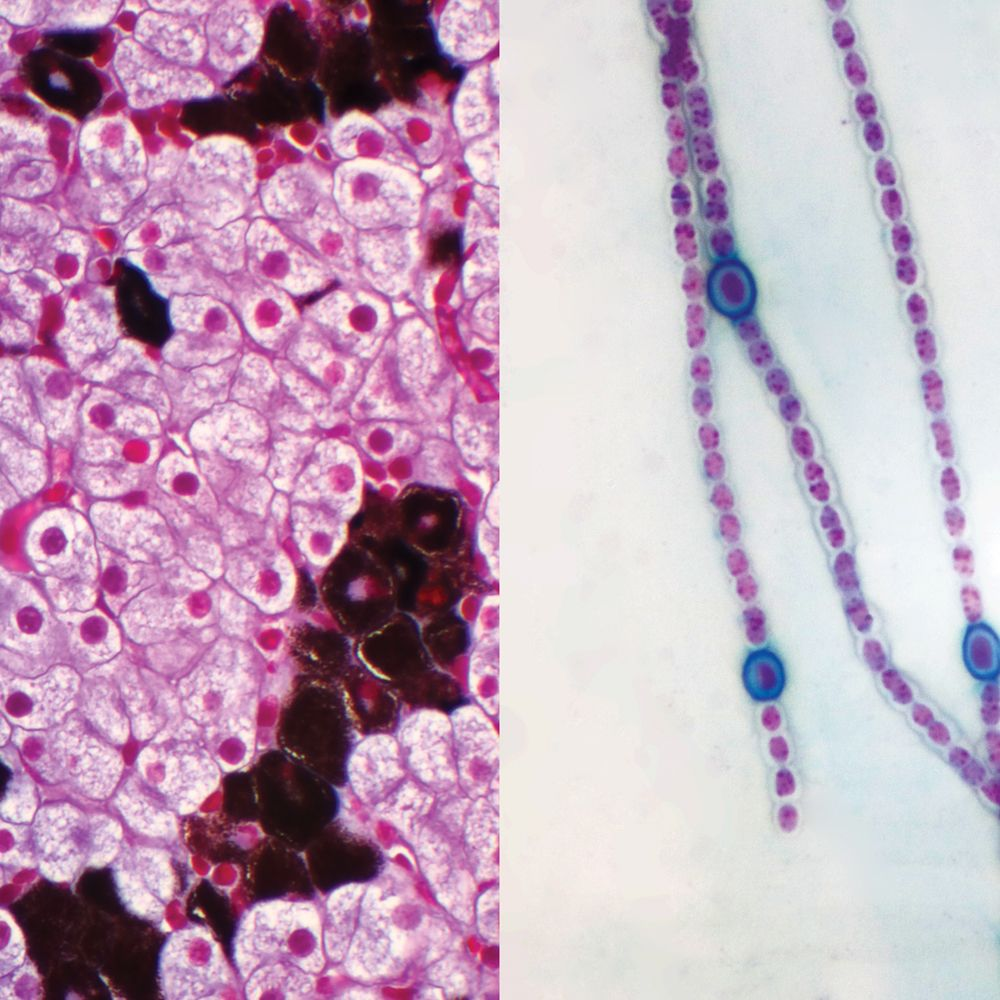 Prokaryotic And Eukaryotic Cells Individual Microscope Slide Review