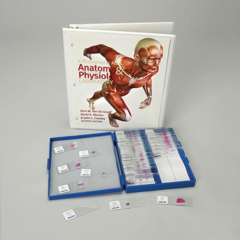 Basic Anatomy and Atlas Slide Set   Carolina.com