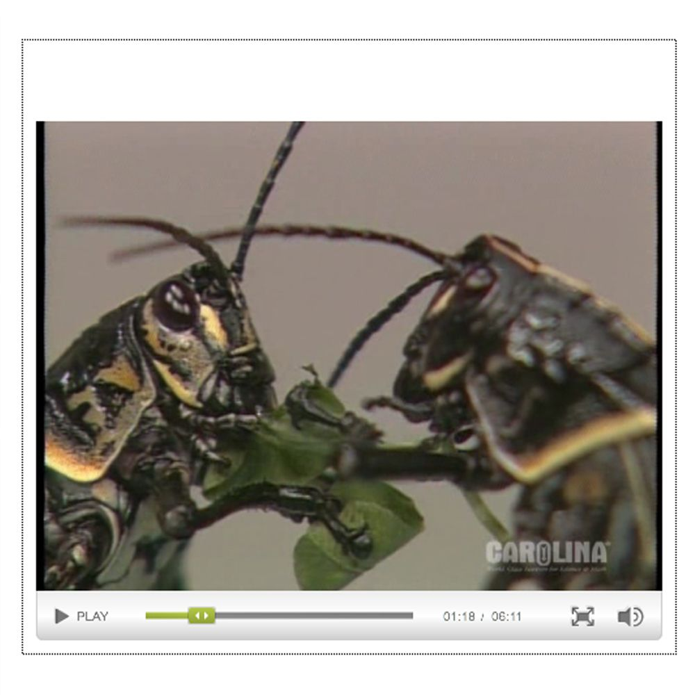 Grasshopper Anatomy: External Anatomy Video | Carolina.com