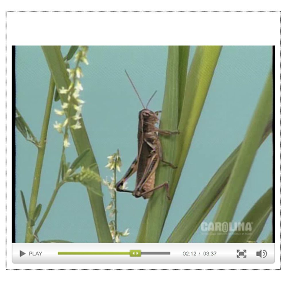 Grasshopper Anatomy Internal Anatomy Circulatory Respiratory