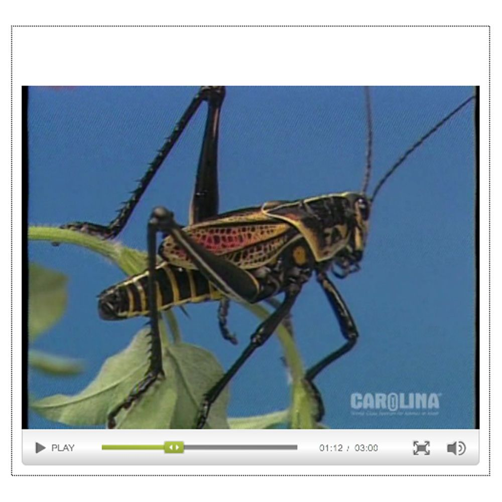 Grasshopper Anatomy Series Videos | Carolina.com