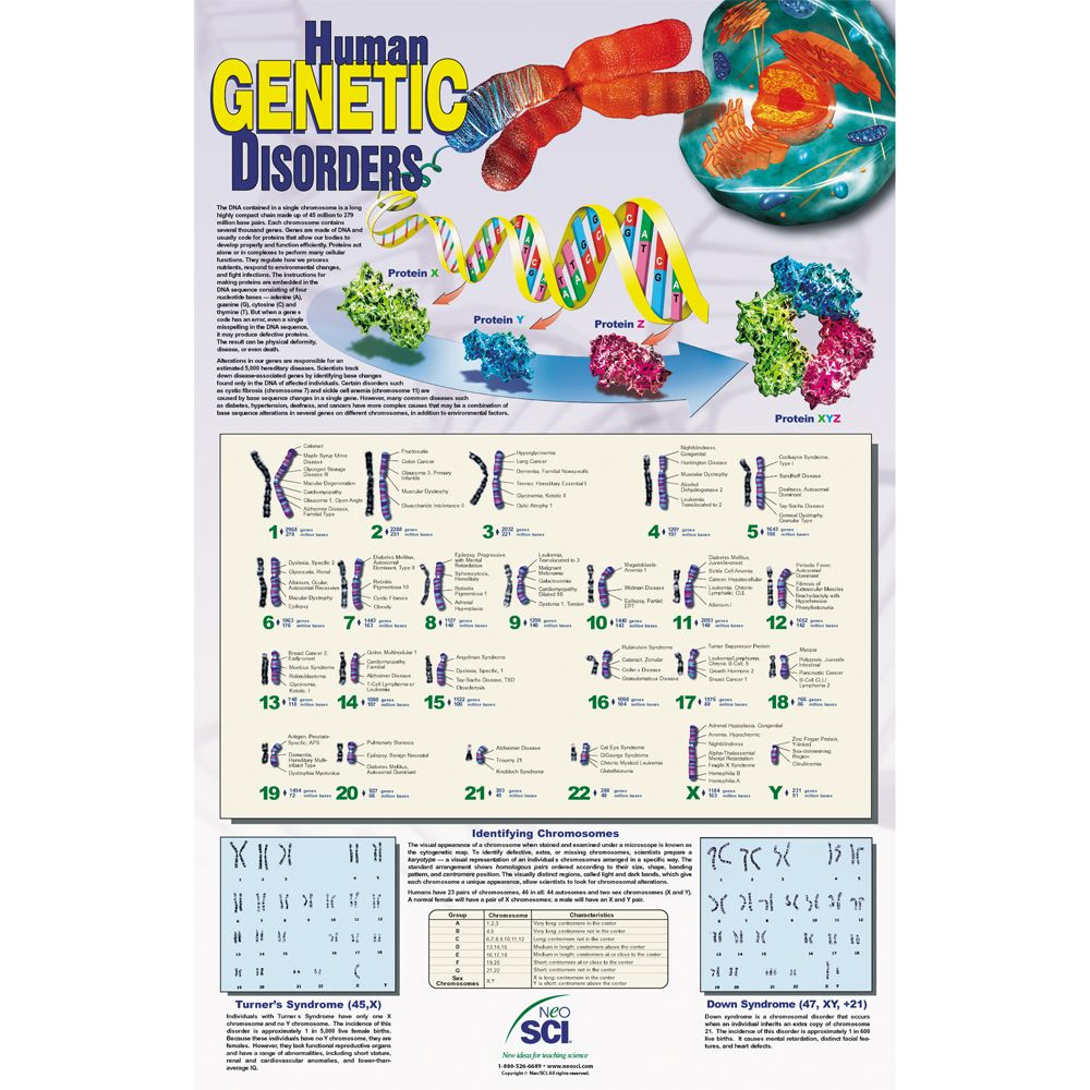 list genetic disorder chart: Human genetic disorders chart carolina com