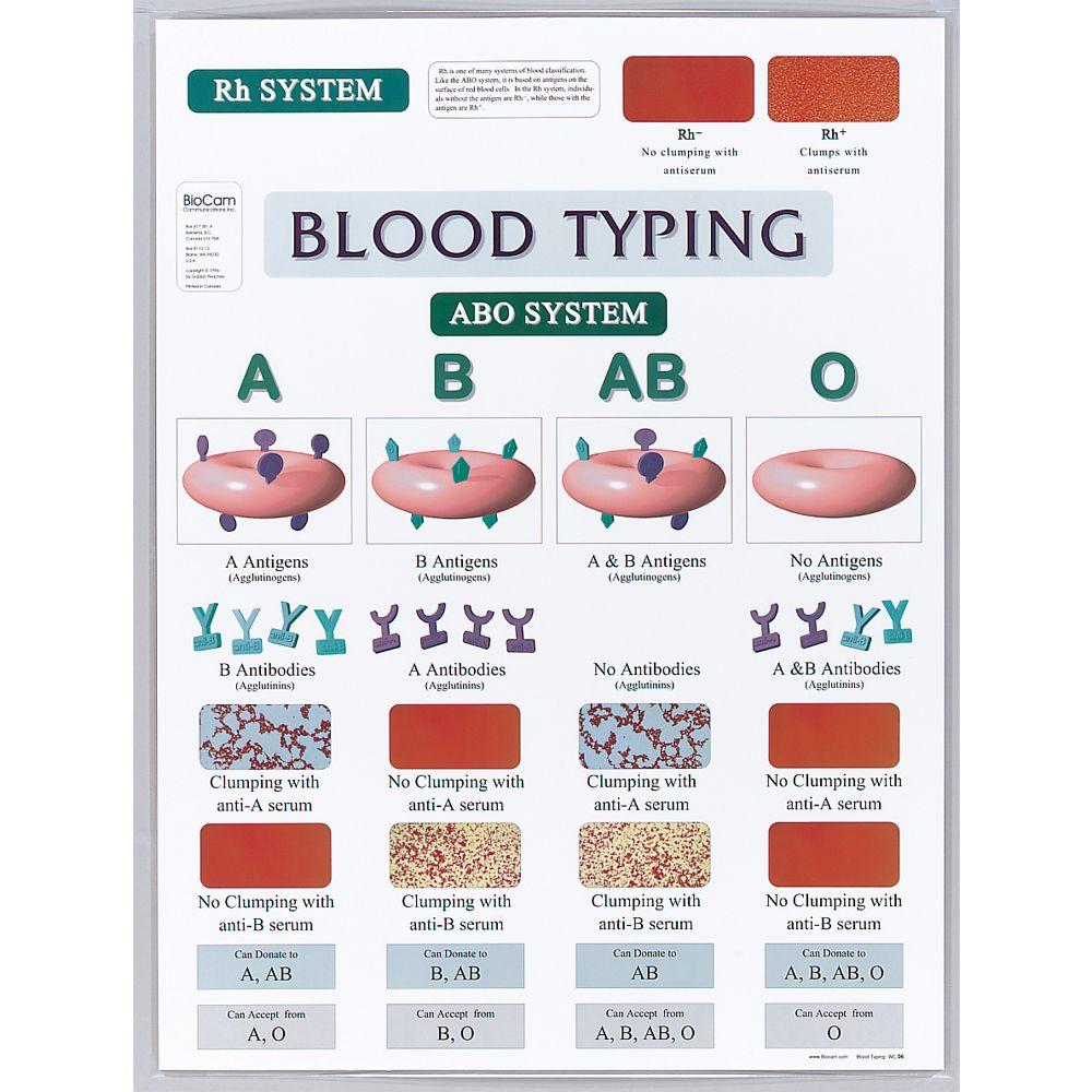 parent blood types chart
