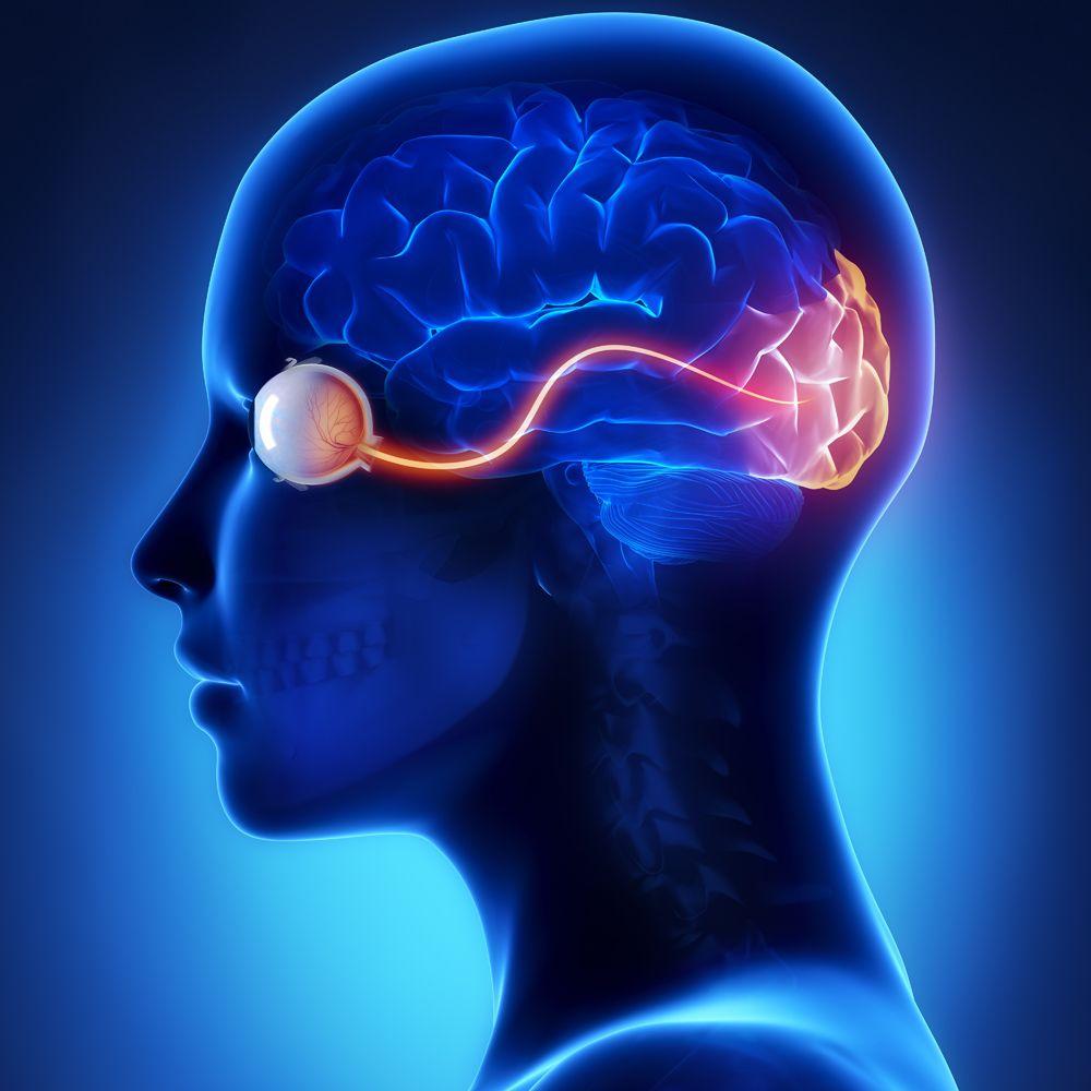 Optics of the Human Eye | Carolina.com