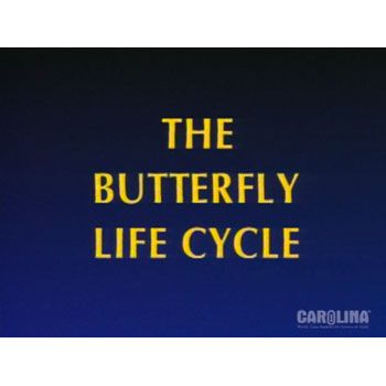 Life Cycle of the Painted Lady Butterfly Video  Carolinacom