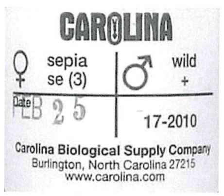 Label indicating drosophila genetic cross
