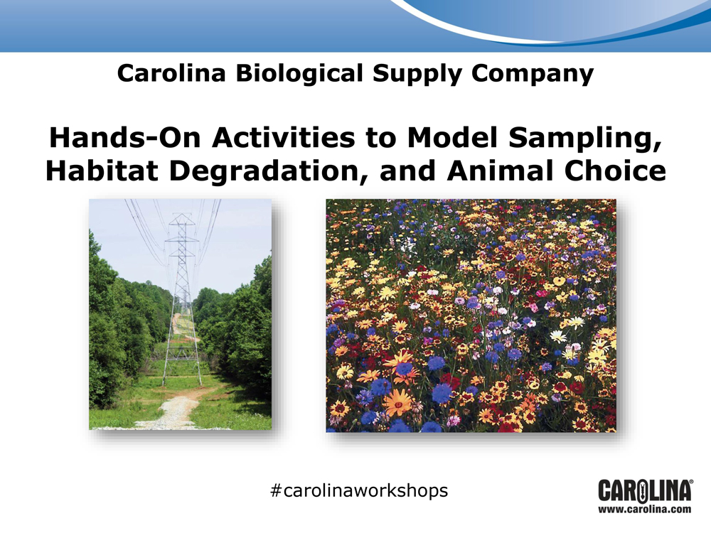 Hands-On Activities to Model Sampling, Habitat Degradation, and Animal Choice