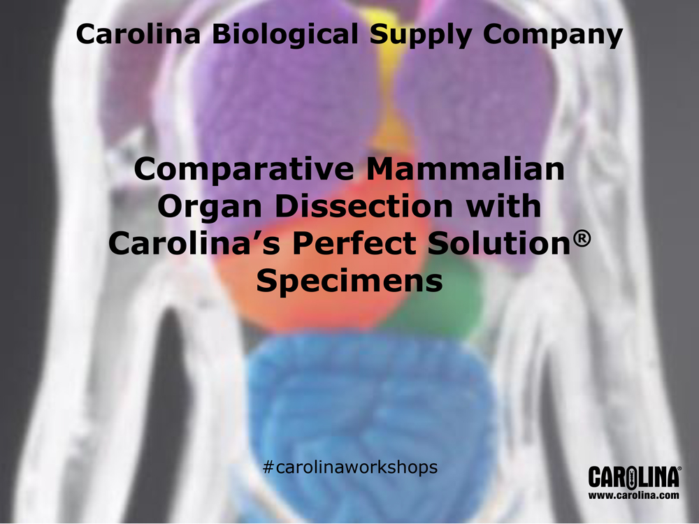 Comparative Mammalian Organ Dissection with Carolina's Perfect Solution® Specimens