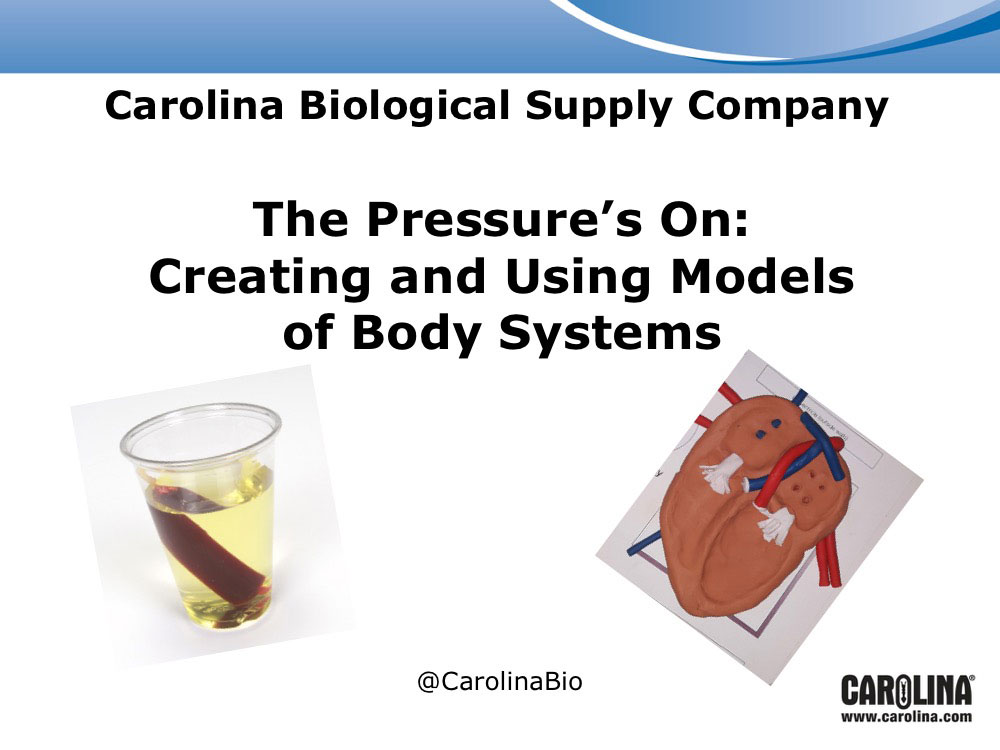 The Pressure's On: Creating and Using Models of Body Systems