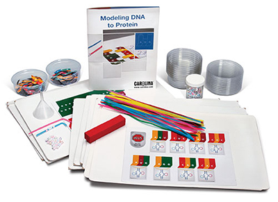 modeling dna to protein kit image