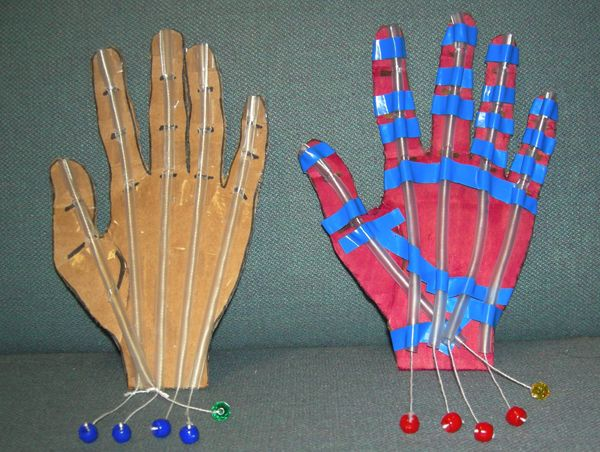Flex and Extend: Modeling a Human Hand | Carolina com