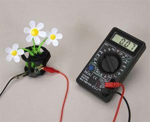 Single Function Signal Generator | Carolina com