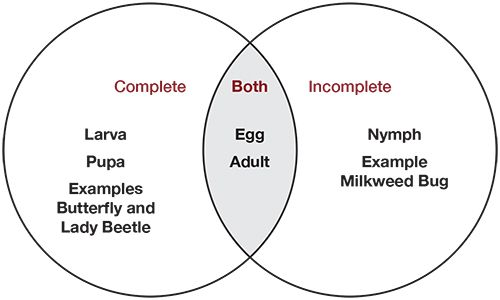 Metamorphosis Venn Diagram