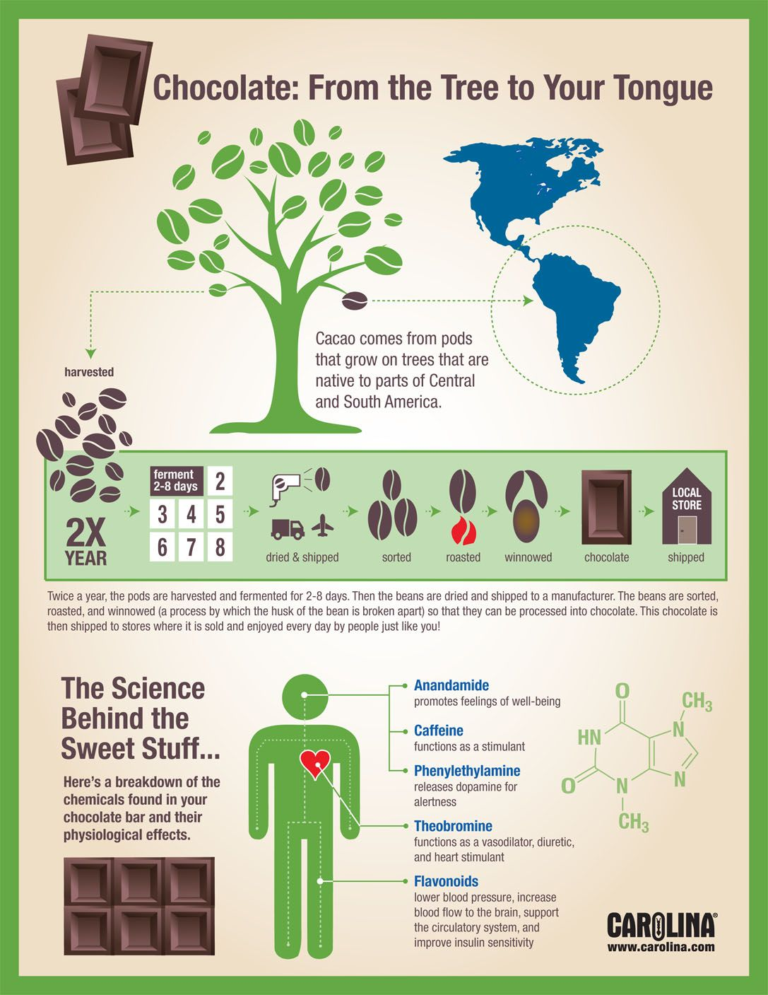 Infographic - Chocolate: From the Tree to Your Tongue