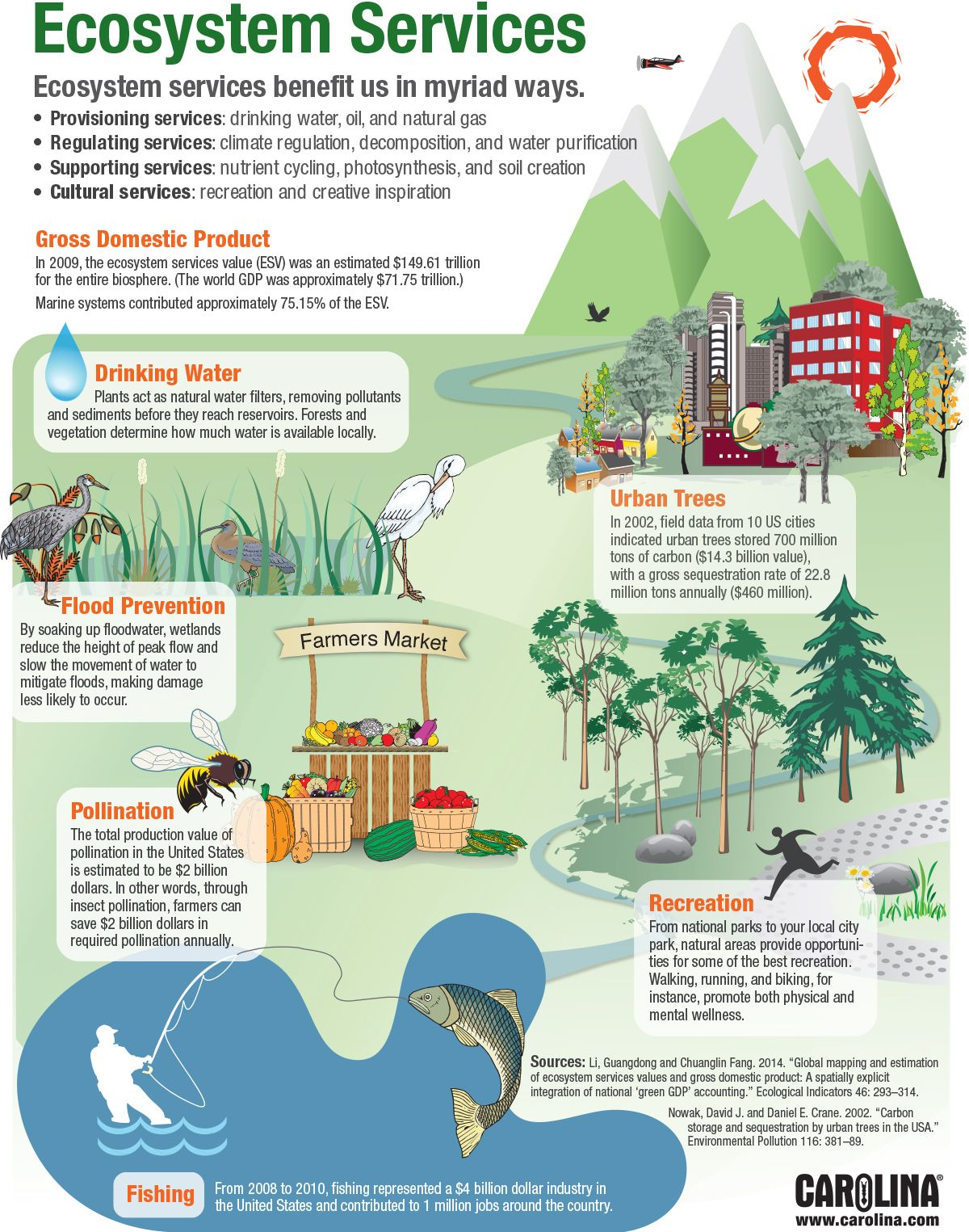 Infographic: Ecosystem Services
