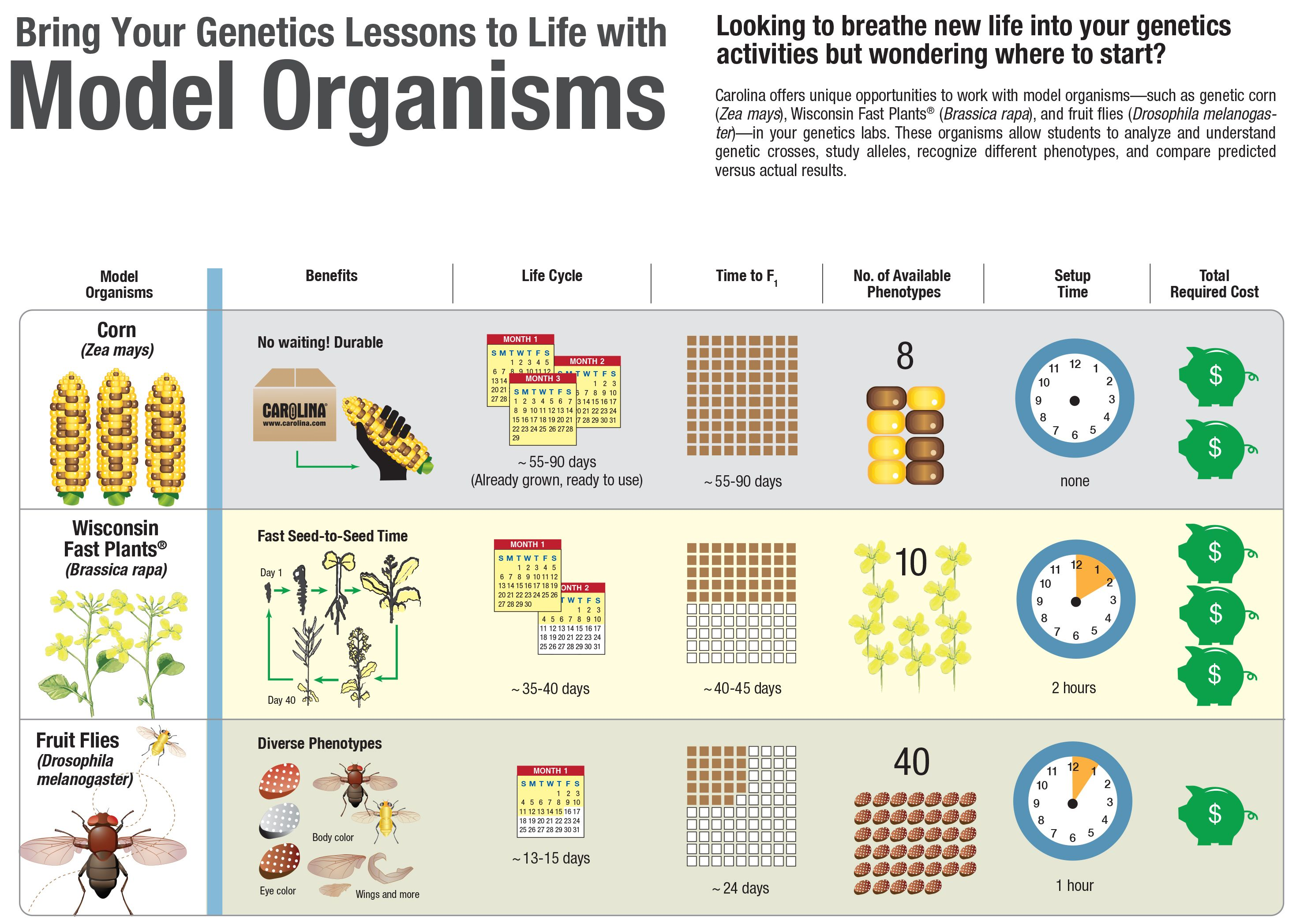 Infographic: Bring Your Genetics Lessons to Life with Model Organisms