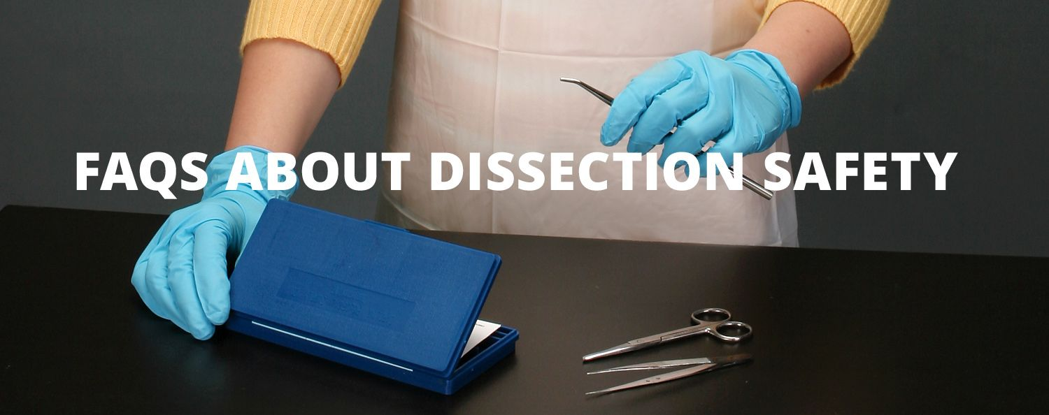 Faqs about dissection safety carolina dissection faqs fandeluxe Image collections