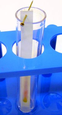 Figure 3 Chromatography paper strip suspended in a test tube.