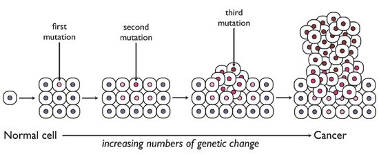 Captivating Stepwise Progression. The Acquisition Of The Mutations That Transform  Normal Cells ... Nice Ideas