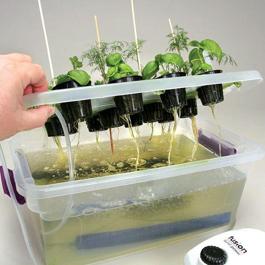 Hydroponic Nutrient Solution | Carolina com
