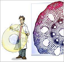 Learnetic Science