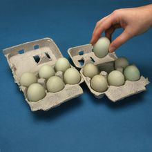 Duck Eggs, Fertile, Unit of 12