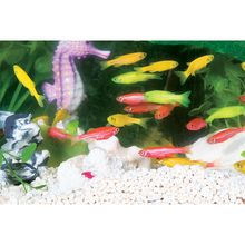 GloFish, Fluorescent Fish, Starfire Red, Living, Pack of 4